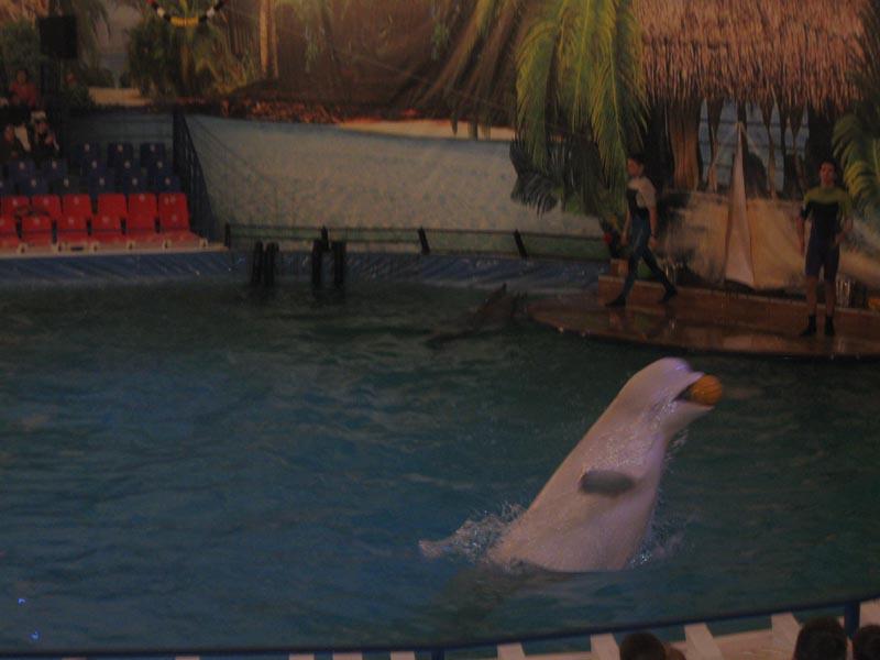 Отчёт об экскурсии в Дельфинарий