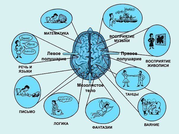 Виды интеллекта