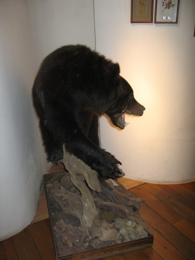 Всероссийский музей леса