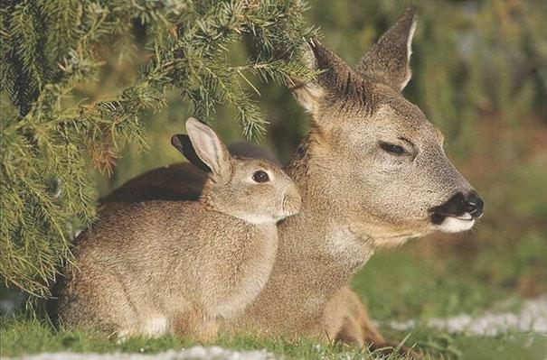 Бывает и так, что разные виды животных природа наградила удивительным сходством