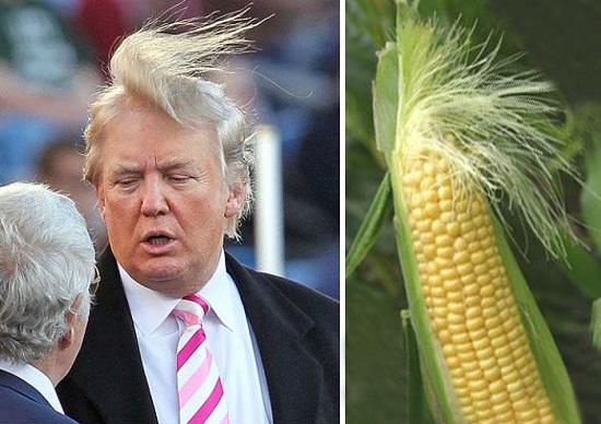Дональд Трамп и кукуруза