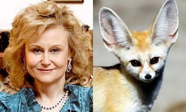 Дарья Донцова и лисичка фенёк